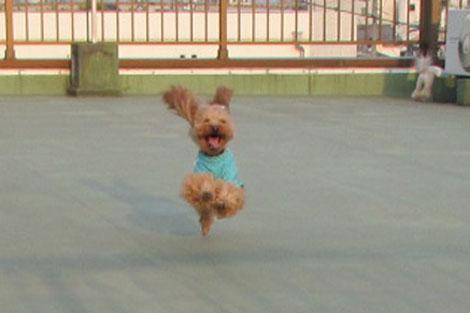 飛行犬R 1