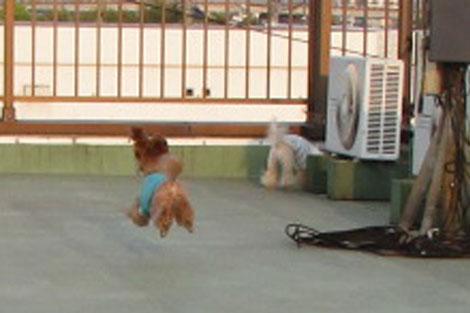 飛行犬R 2