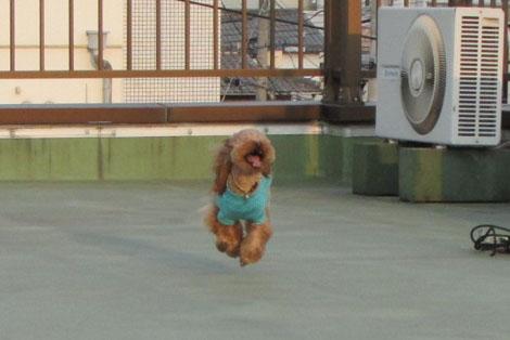 飛行犬R3