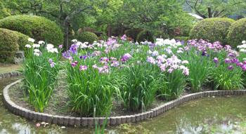 城山花菖蒲園