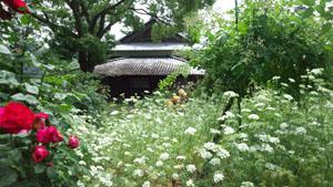 吉香薔薇園1