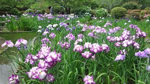 ぶらり吉香公園1