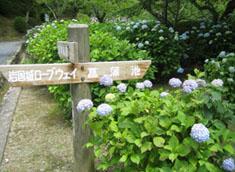 城山菖蒲園入口付近
