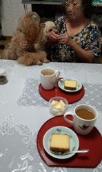 お茶始まりました1