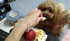 りんごきゅん