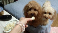 梨食べましょうR