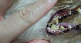 Nonの歯2