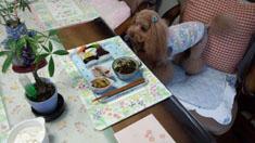 お昼ご飯開始5