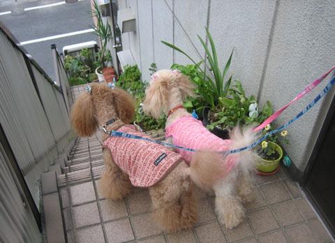 お散歩GO!