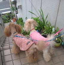 お散歩GO1
