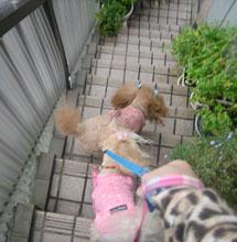 お散歩GO4