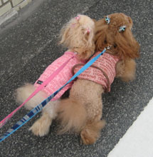 お散歩GO6