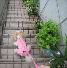 お散歩GO2