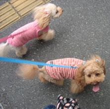 お散歩GO12