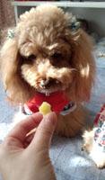 薩摩芋試食6