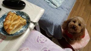 食いしん坊の視線