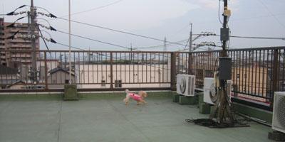 屋上散歩♪1