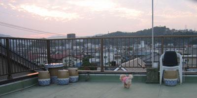 屋上散歩♪2