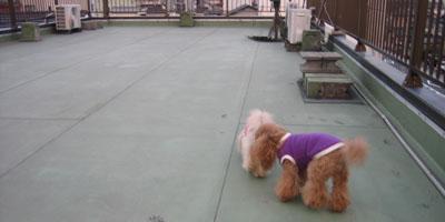 屋上散歩♪4