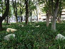 白川公園1