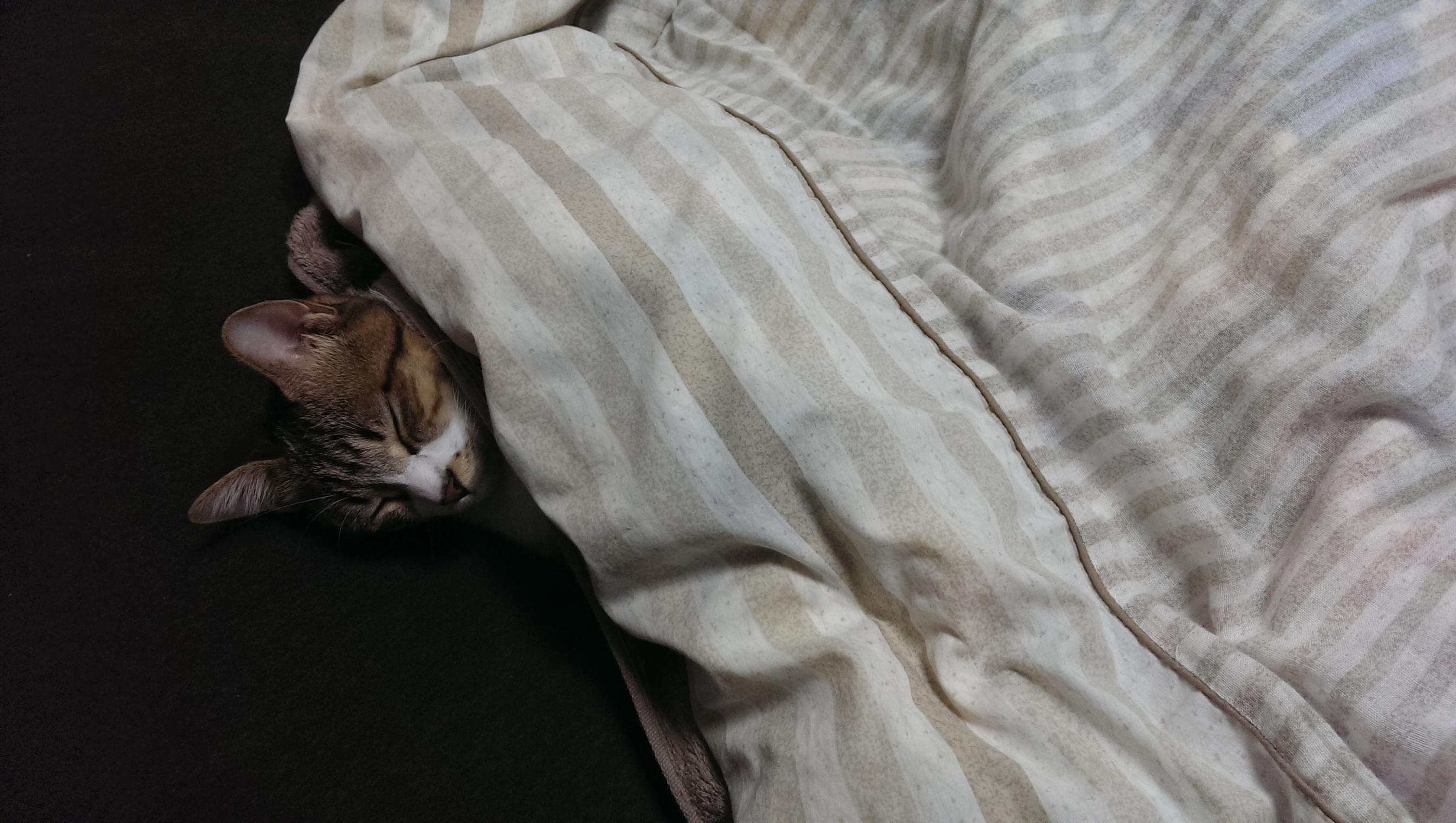 p-suke sleepin!