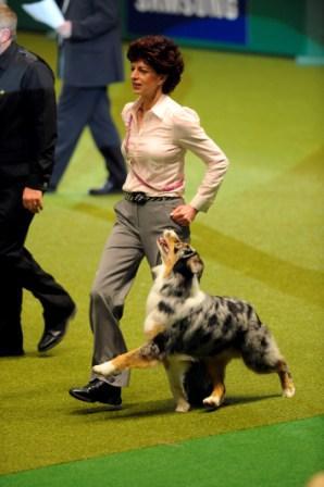Amberslade-Buckaneer-Susanne-Jaffa-Crufts-Ob-Ch-Dog-2010.jpg