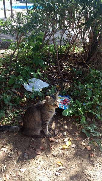 津田沼の猫
