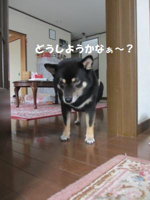 013_convert_20130822162857.jpg