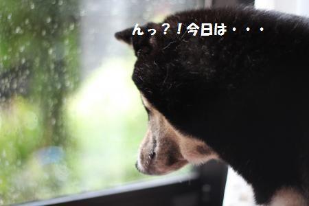 018_convert_20130916135922_20130916145358dad.jpg