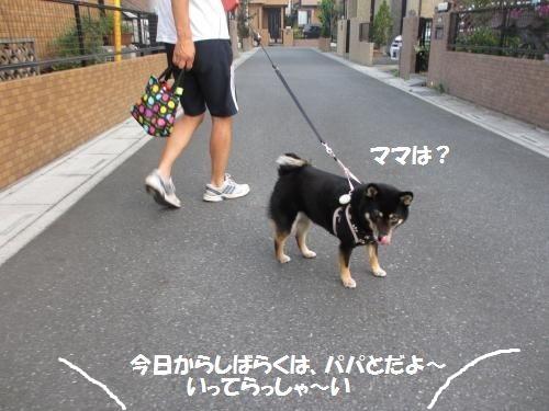 044_convert_20130811104911.jpg