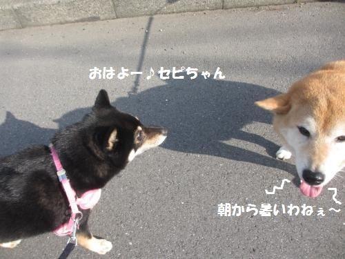 106_convert_20130617131641.jpg