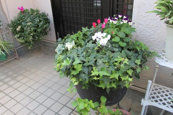 25.11.16庭の花 044_ks