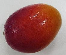 mg-1-4.jpg