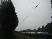 20060818083723.jpg