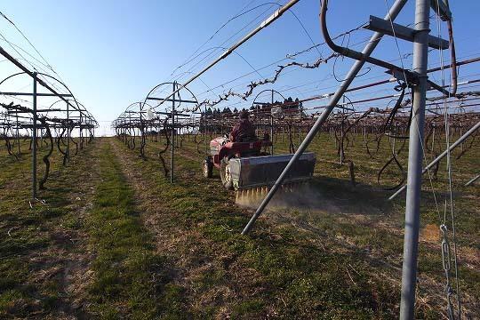 $挑戦!都農ワインのブドウ栽培とワイン醸造