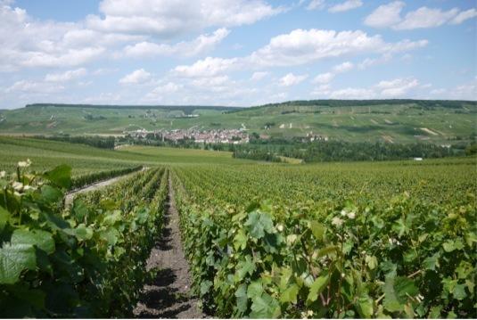 $挑戦!都農ワインのブドウ栽培とワイン醸造-__.JPG