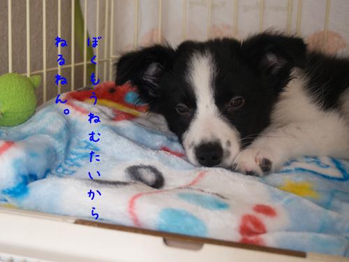 PA060360pa060360.jpg