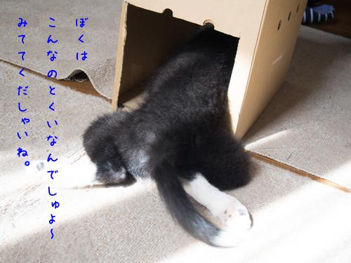 PA150736.jpg