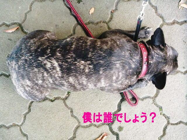 2013長岡公園381