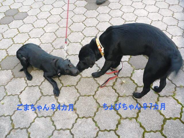 2013長岡公園389