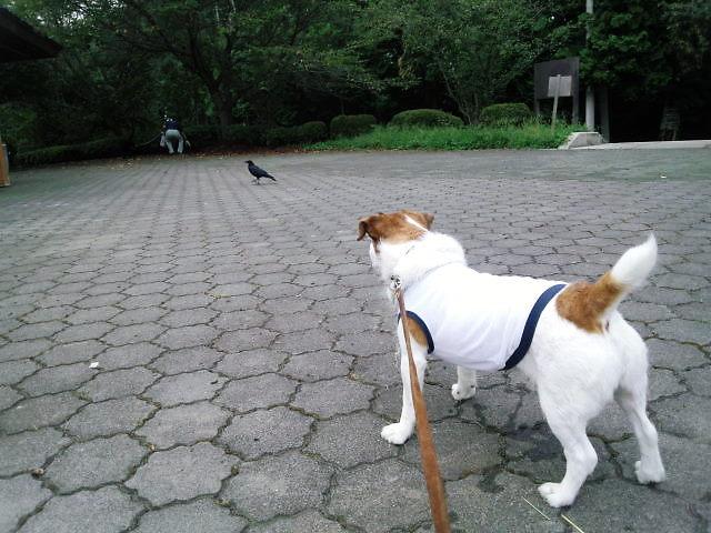 2013長岡公園458