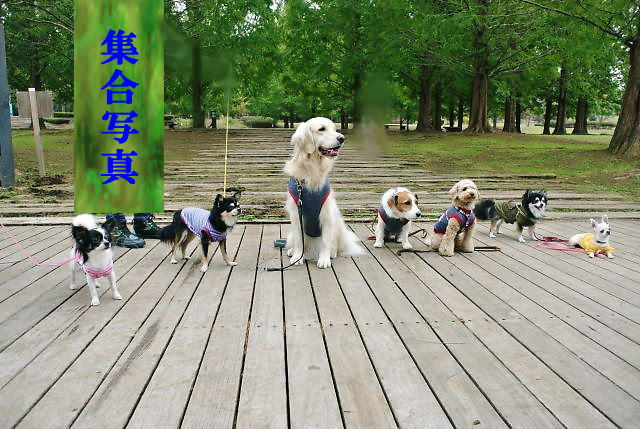 2013長岡公園579