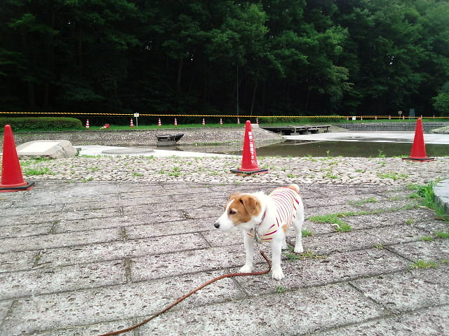 2013長岡公園310
