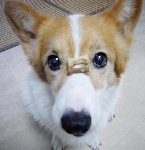 クッキーに