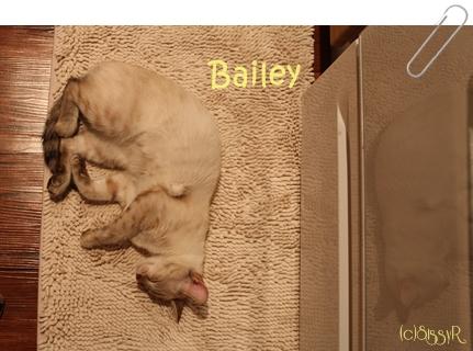 bailey111413.jpg