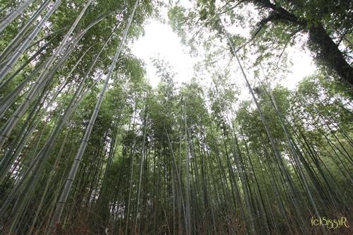 kyoto01b.jpg