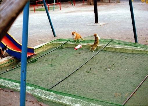 梅佳代「うめめ」ネコ写真
