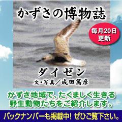 kazusa2013-09.jpg