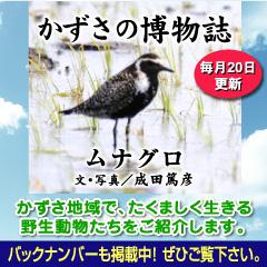kazusa201305.jpg