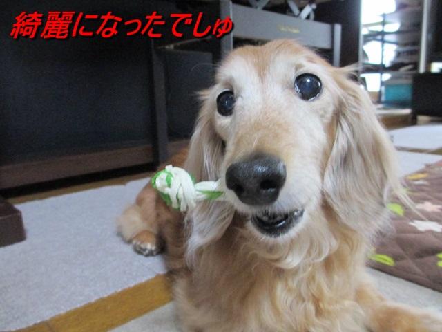 歯磨きガム5
